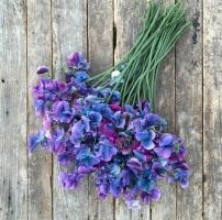 flower-3aa