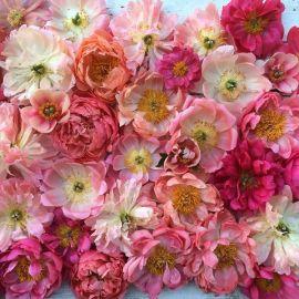 flower-7a