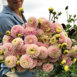 flower-9a