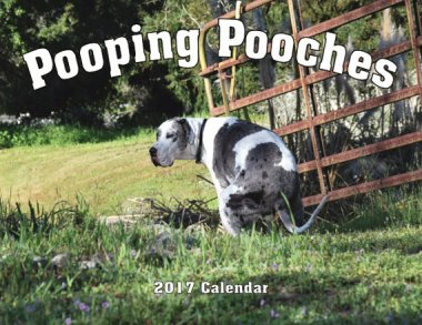 What's more humiliated-looking than a pooping dog? A dozen pooping dogs!