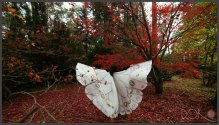 wings-d