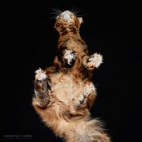 cats 12b