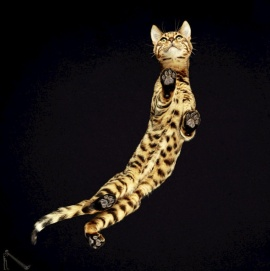 cats 7b