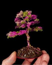 bonsai 10