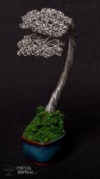 bonsai 16