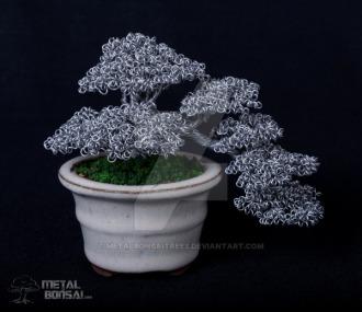 bonsai 2b