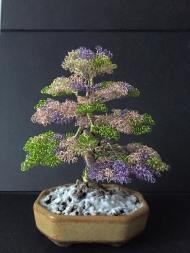 bonsai 7a
