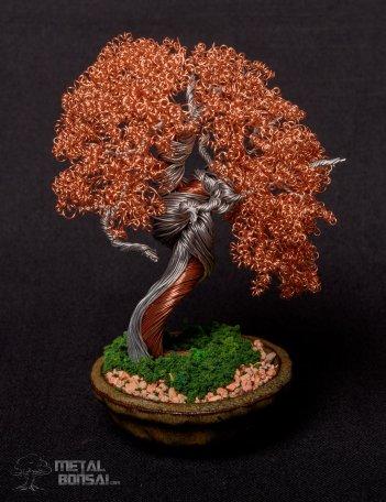 bonsai 8a