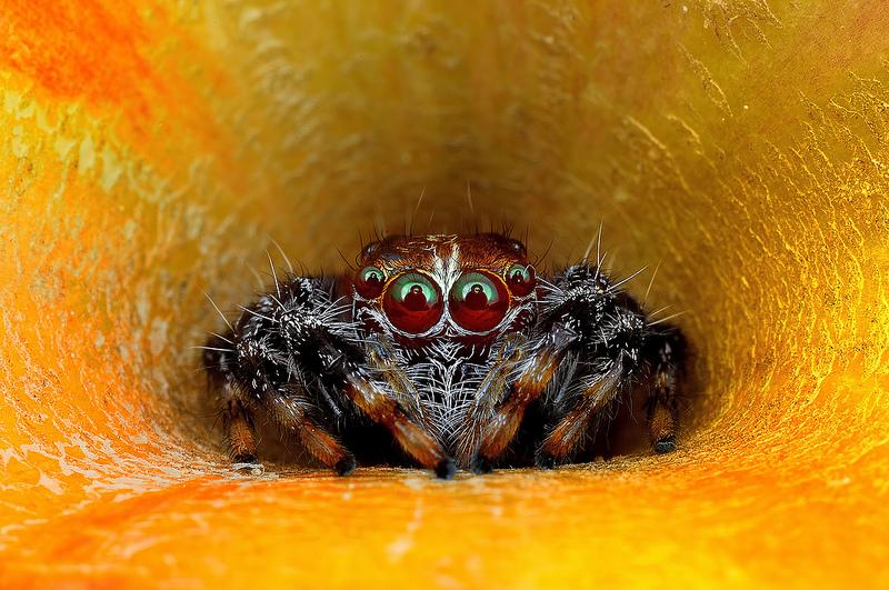 spider 2a