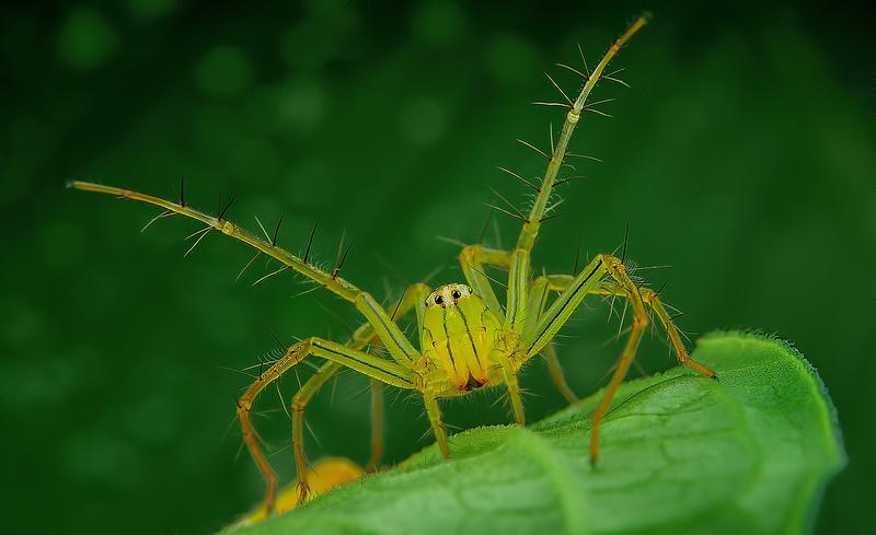 spider 2b