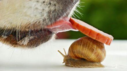 snail 10