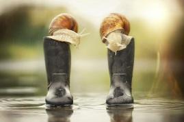 snail 2a