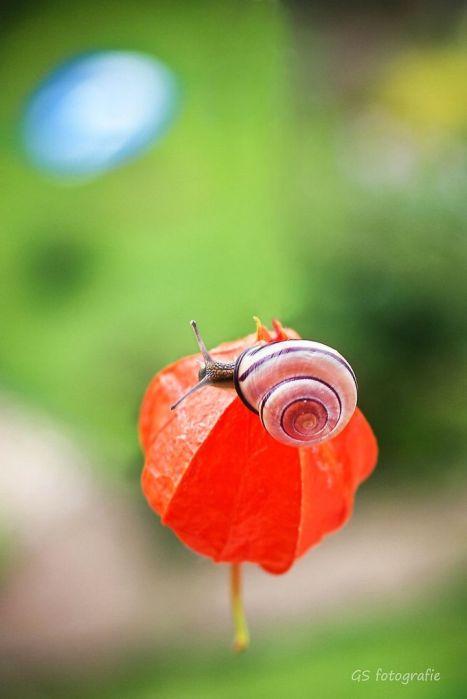 snail 8