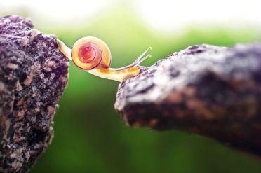 snail 9