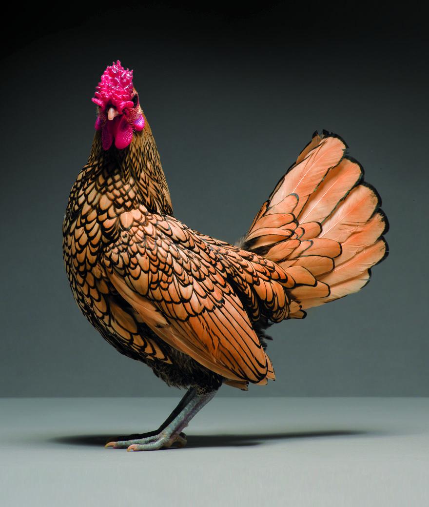 chick 0