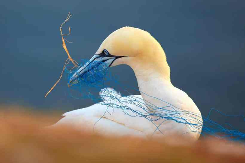bird 7 Petr Bambousek