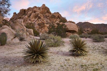 cactus 6
