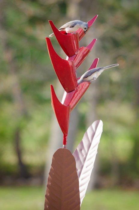 cactus 6a