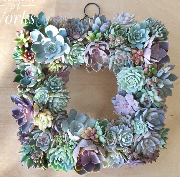 succulent 0