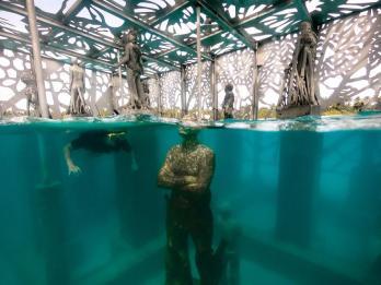 Coralarium 8