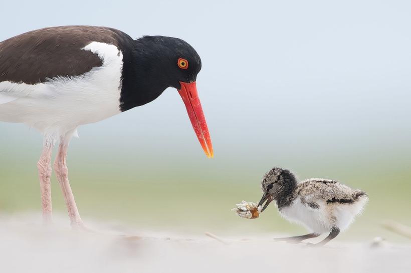 Audubon 9