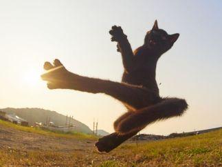 cat 9